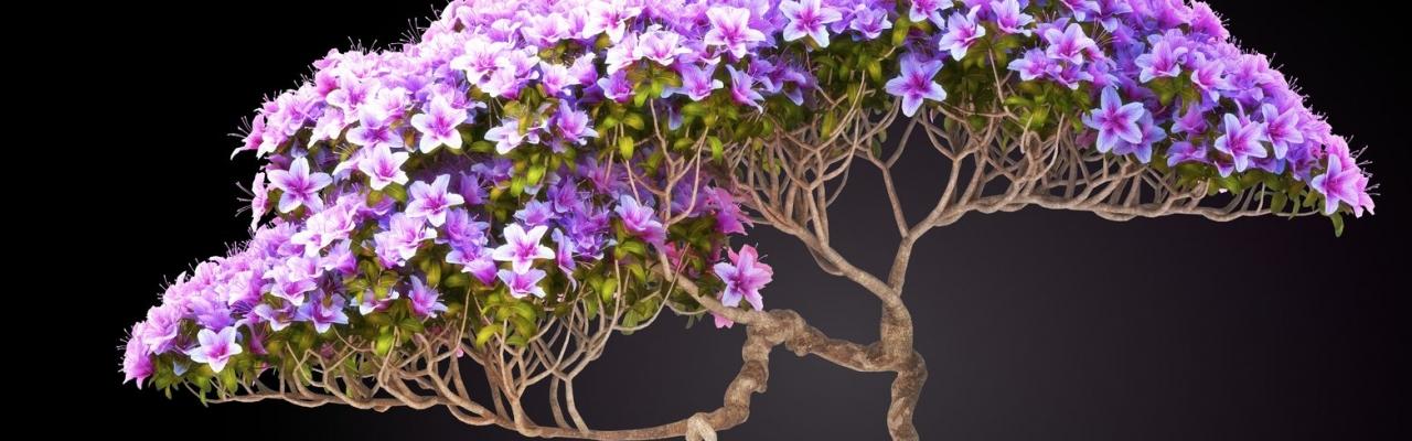 Bonsai - Gói trọn thiên nhiên trong chậu nhỏ