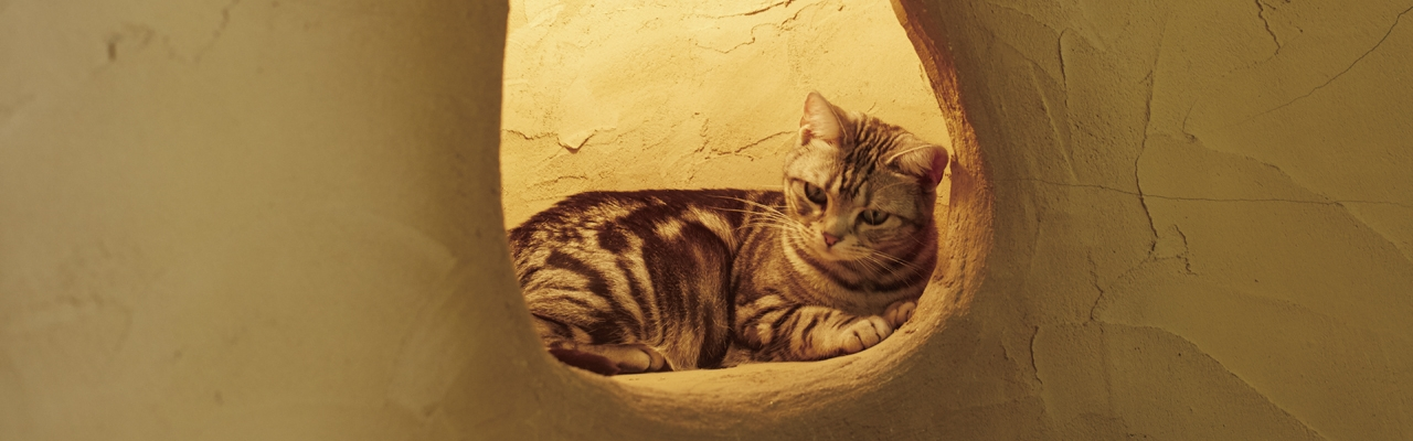 "Cat Cafe ""Temari no Ouchi"""