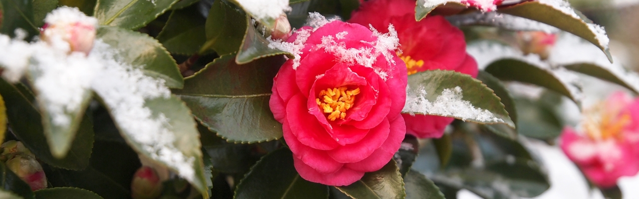 Nhật Bản 24 mùa hoa (phần cuối)