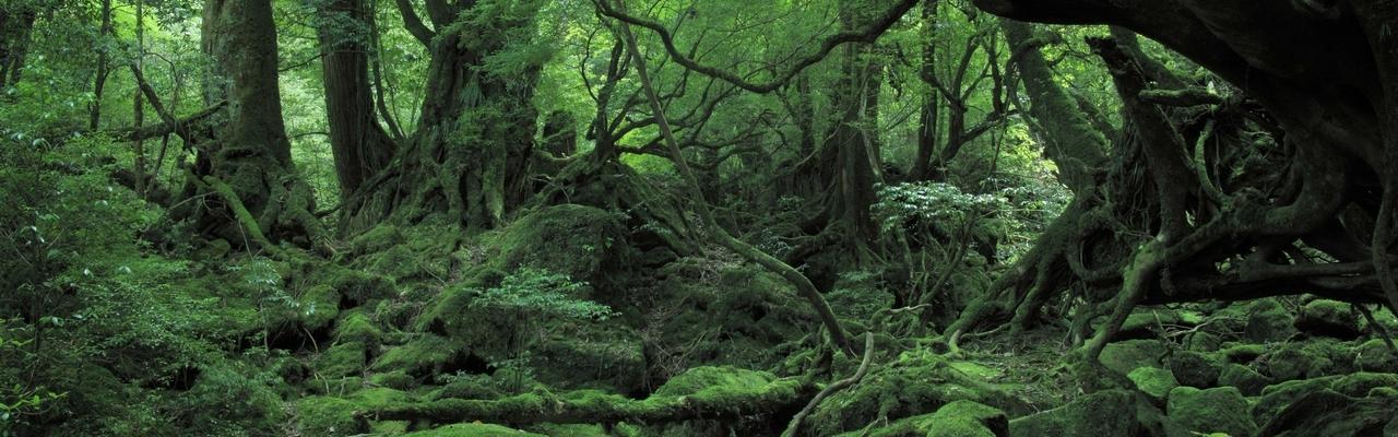 鹿児島の太古の自然に飛び込もう