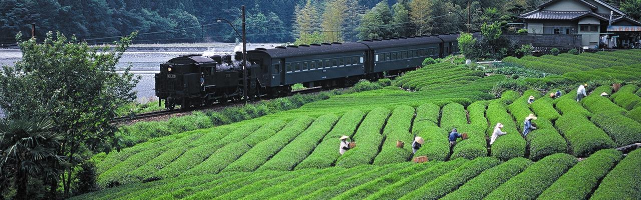 Các loại trà Nhật Bản