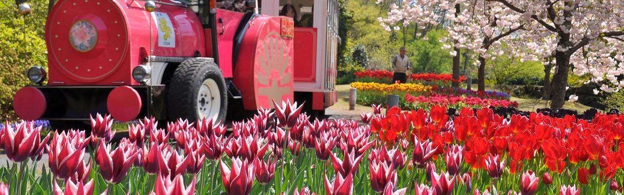 Tuyệt sắc thiên nhiên tại vườn hoa lớn nhất Nhật Bản