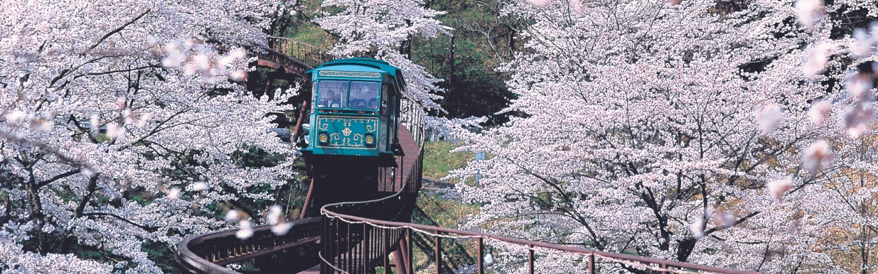 Sendai, một Nhật Bản hoàn toàn mới lạ