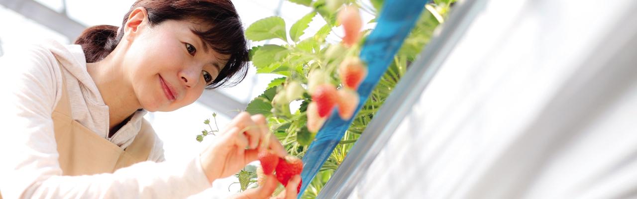 Organic Food - Trở về với tự nhiên