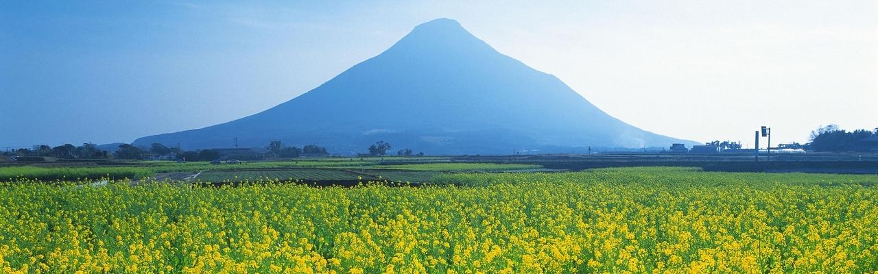 Kagoshima - Vùng đất hoa cải dầu thần thoại