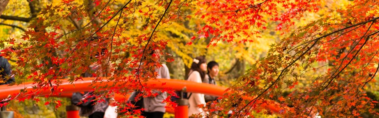 秋色に染まる北関東