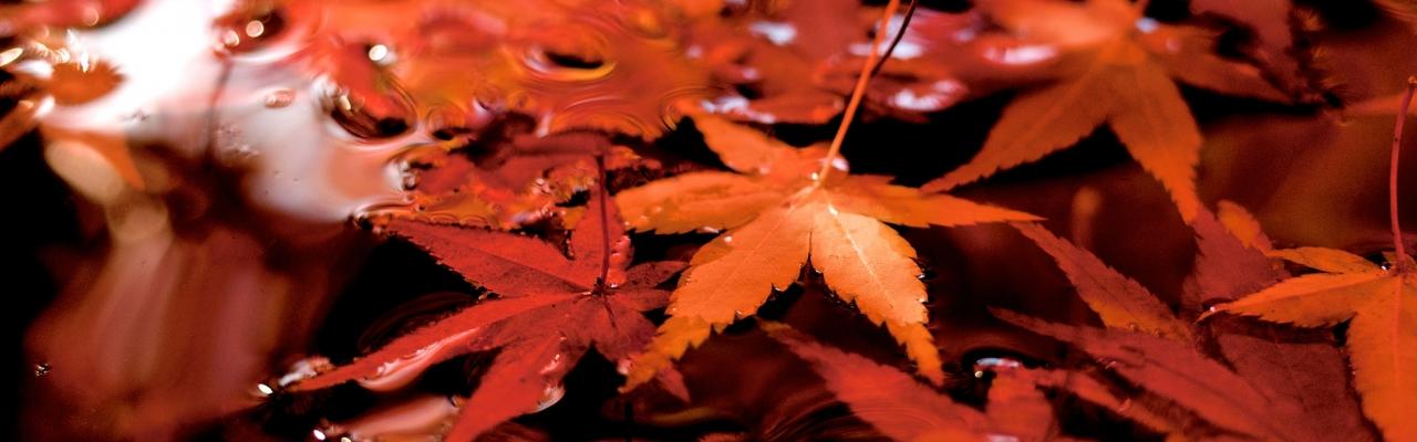 Mùa thu tìm đọc đồng dao Nhật Bản