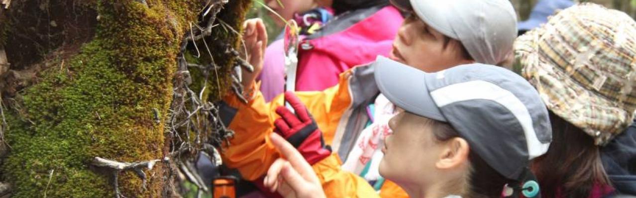 Tình yêu sâu đậm của người Nhật dành cho... rêu
