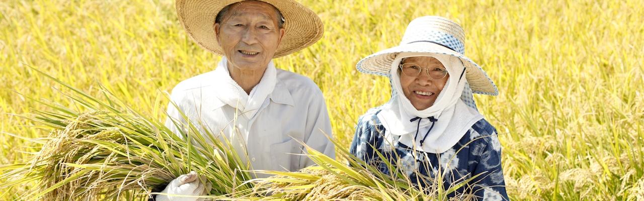 Hạt gạo với người Nhật