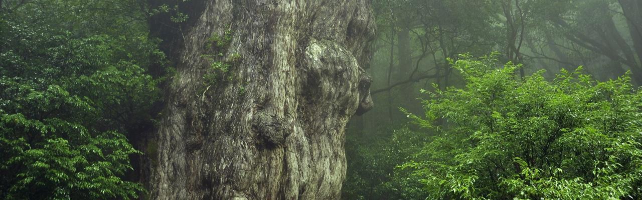 Yakushima - Hòn đảo của những sự sống cổ đại