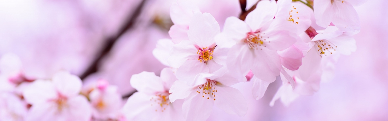Tiêu chí chọn trường tiếng Nhật khi du học Nhật Bản