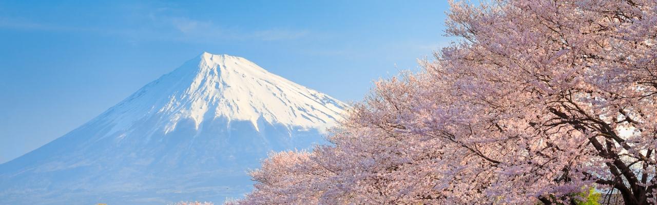 桜に見とれる春の旅