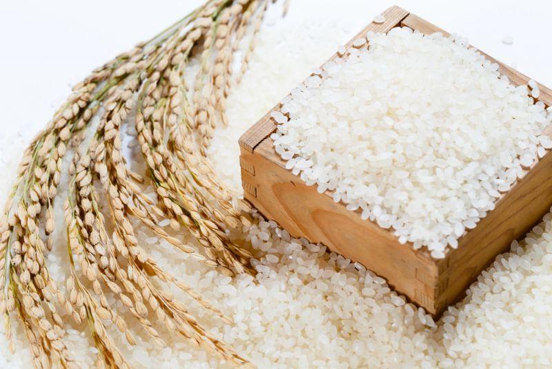 gạo Nhật có hạt tròn