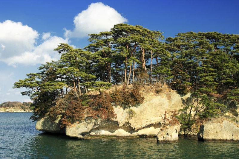 đảo thông ở vịnh matsushima