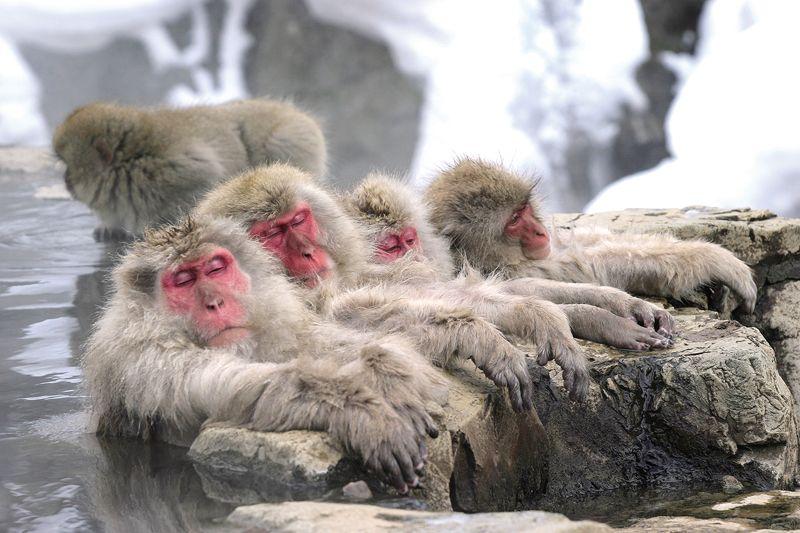 công viên khỉ