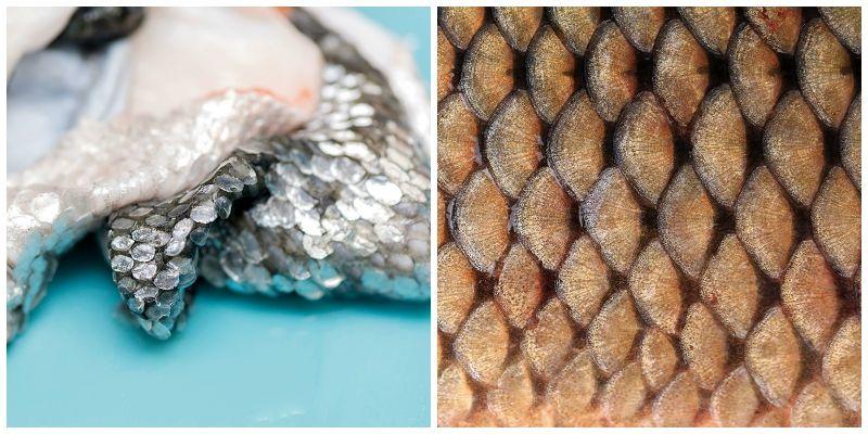 魚の皮と鱗