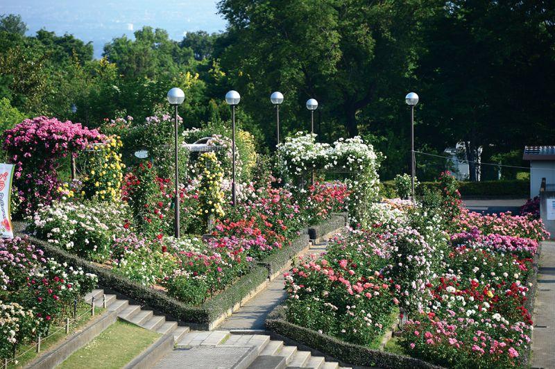 công viên hoa Gunma