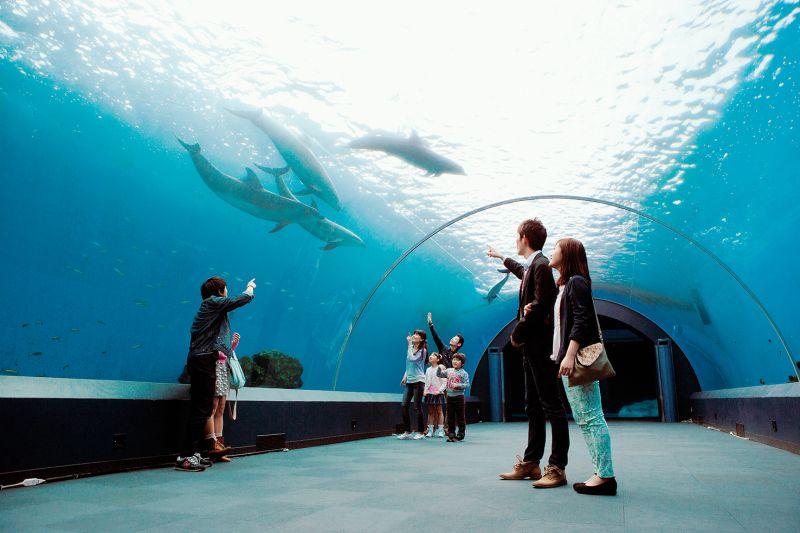 bể cá heo Dolphin Fantasy