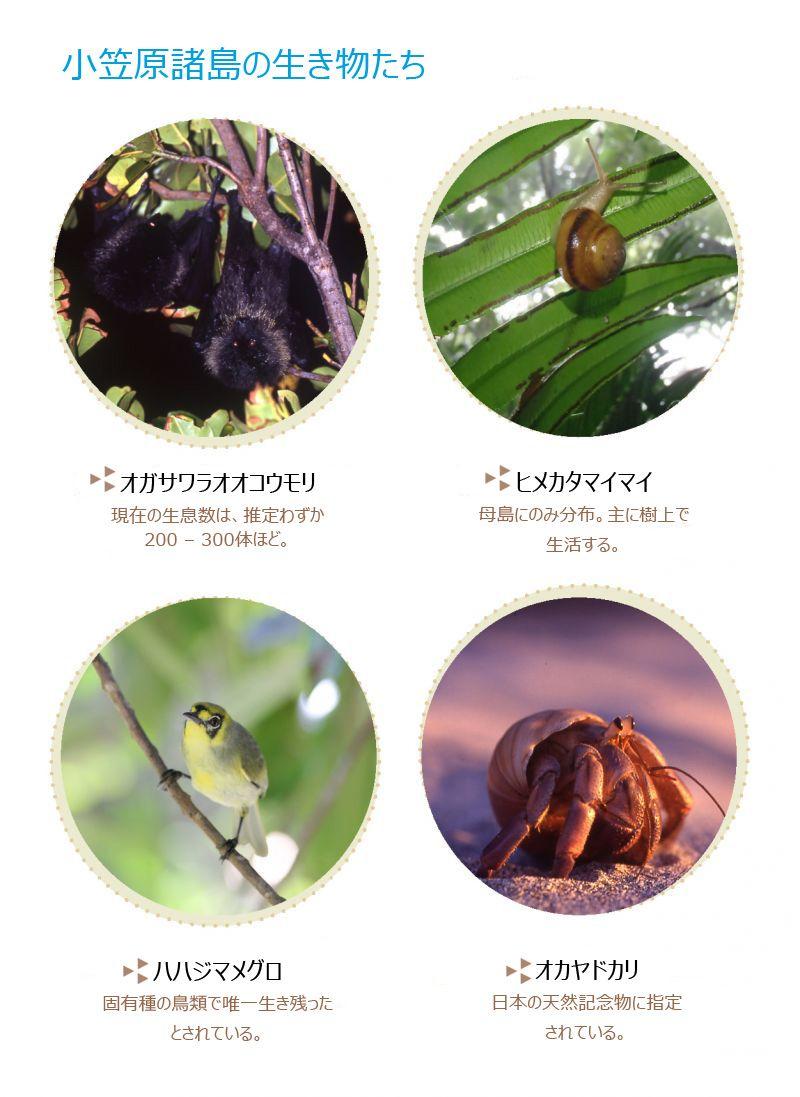 小笠原諸島の生き物