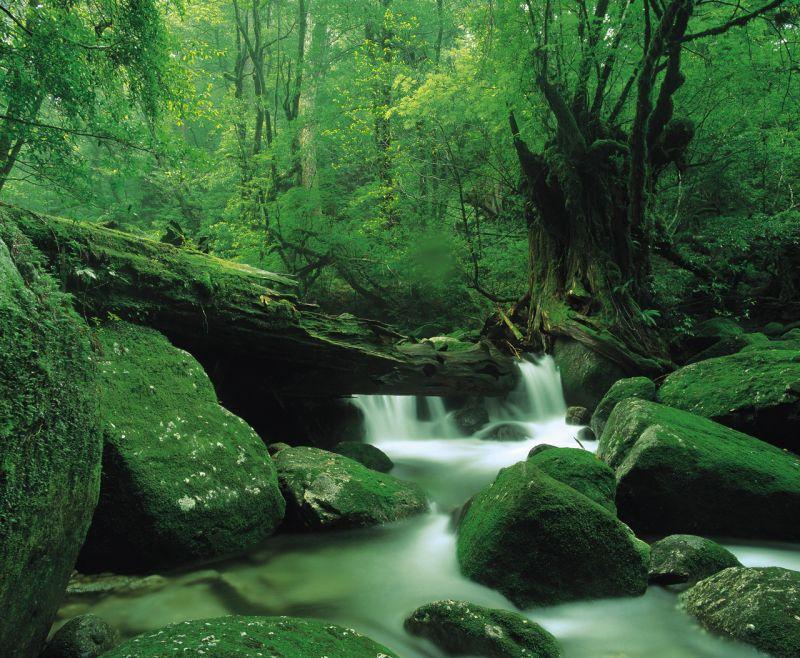「もののけ姫の森」と呼ばれる、白谷雲水峡