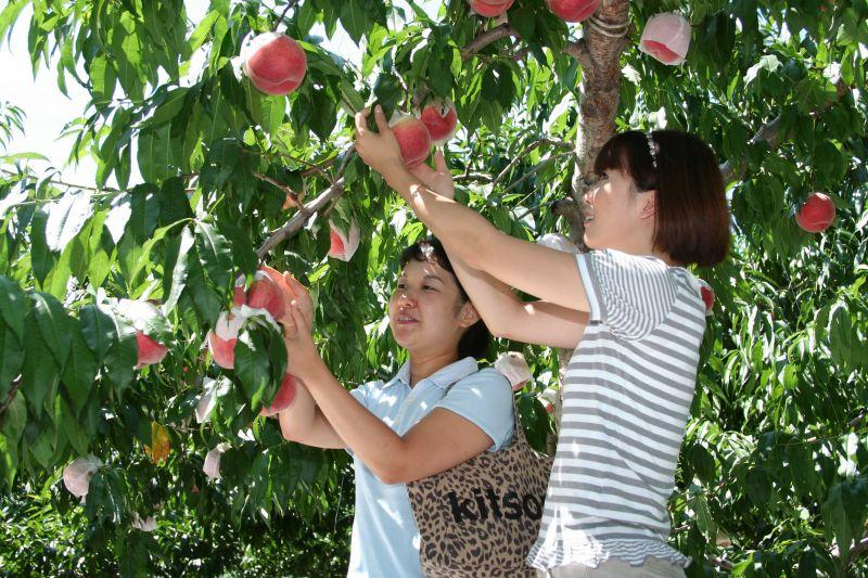 農園で果物を摘む