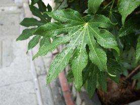Mùa mưa Tsuyu