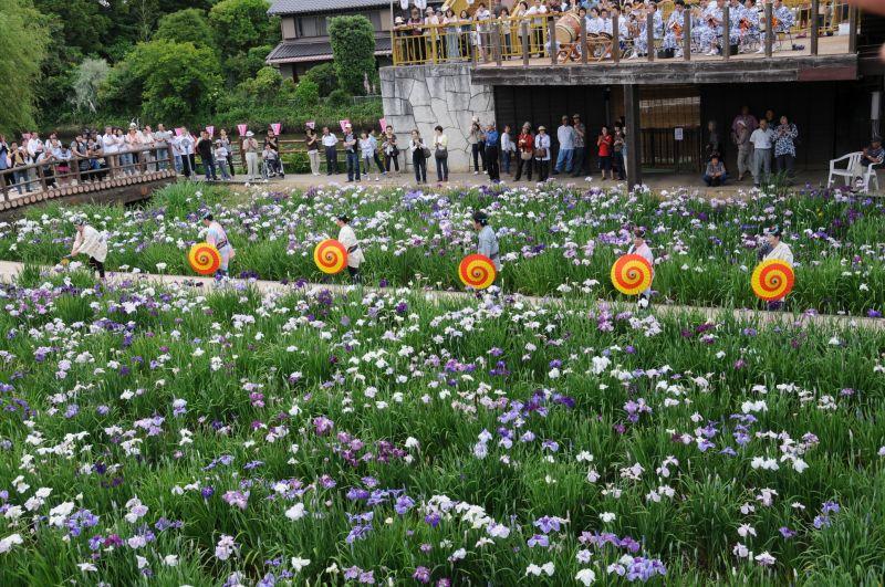 Lễ hội hoa Diên vĩ