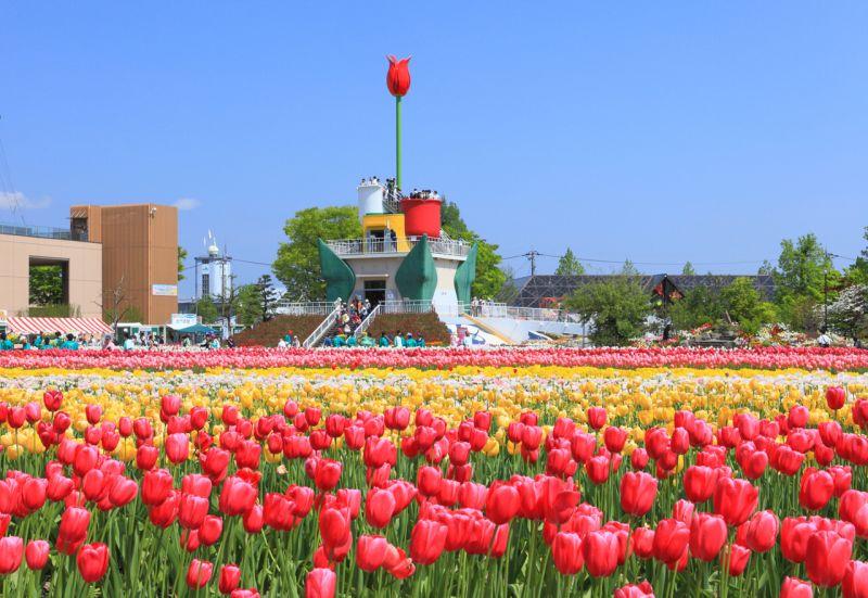 công viên hoa Tulip Tonami
