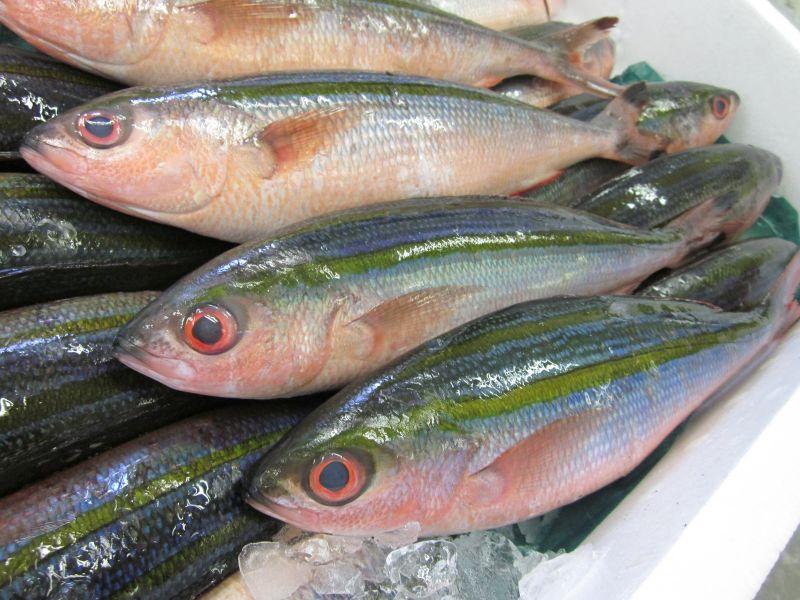 cá Takasago