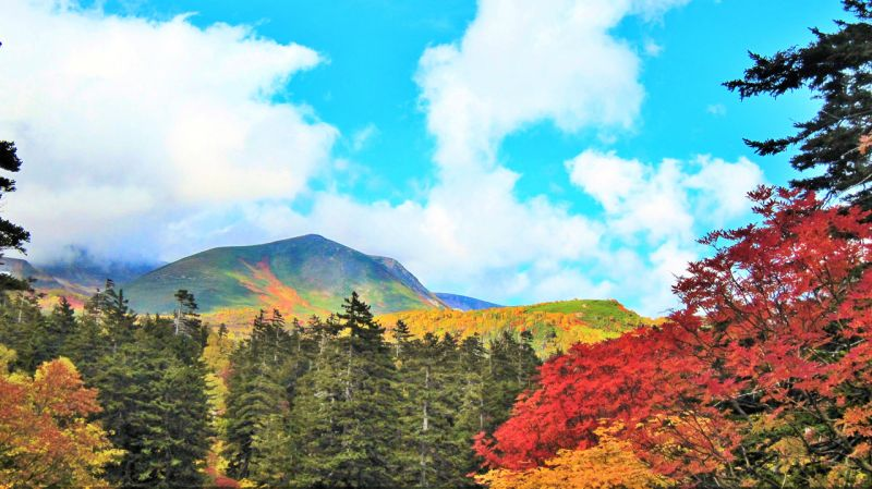 những sắc màu đặc trưng của mùa thu