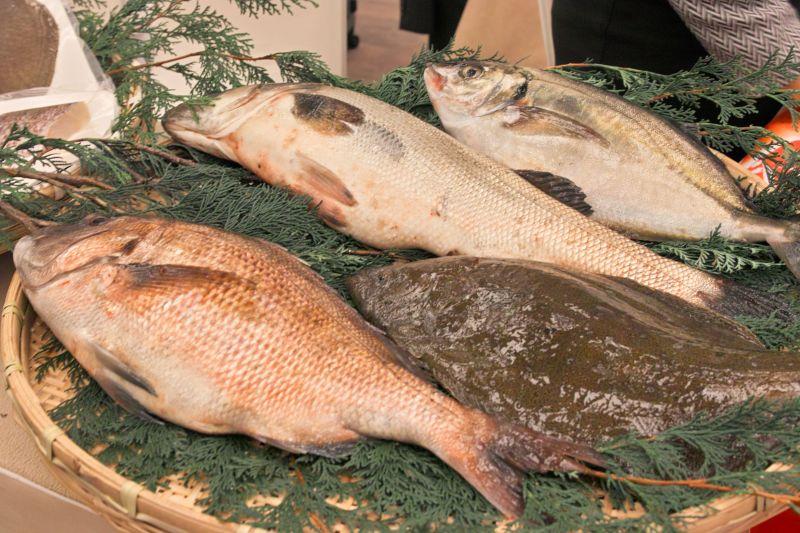 kết nối thương mại về hải sản JETRO