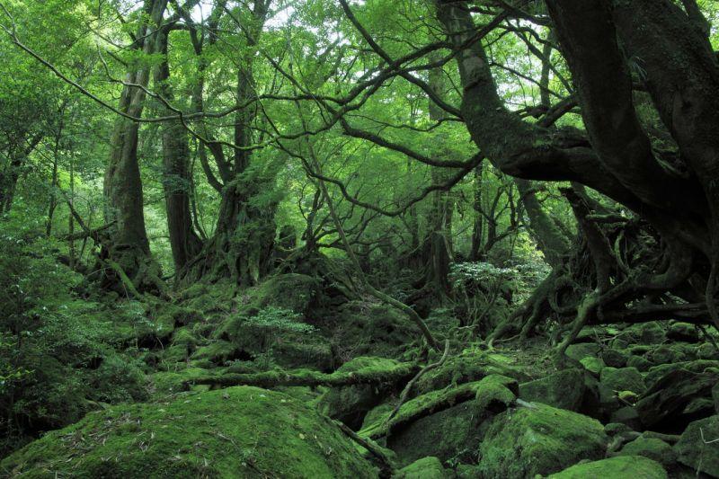 đảo yakushima, kagoshima