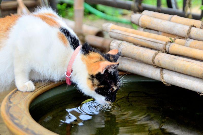 Nước ở Nhật Bản nổi tiếng là ngon, sạch