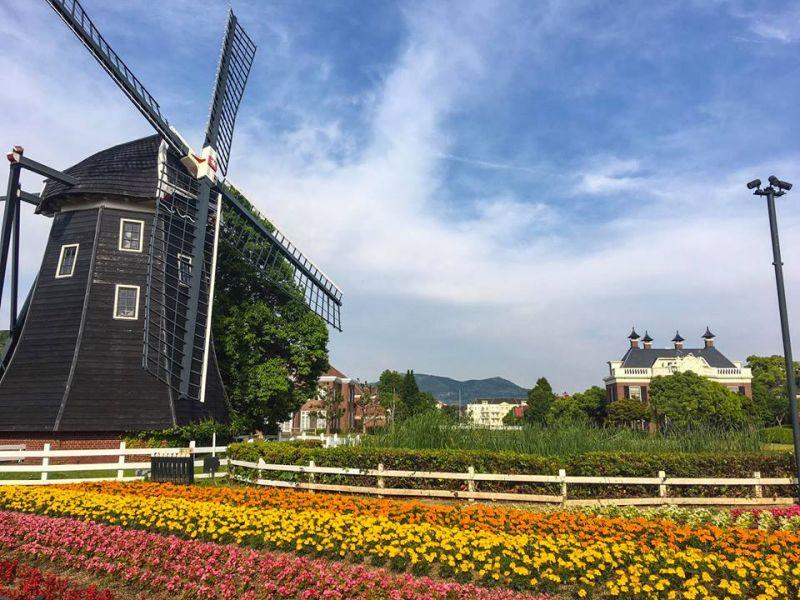 Museum Molen – vườn hoa tulip với những cối xay gió khổng lồ