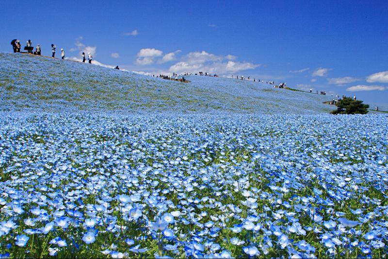 茨城県の国営ひたち海浜公園