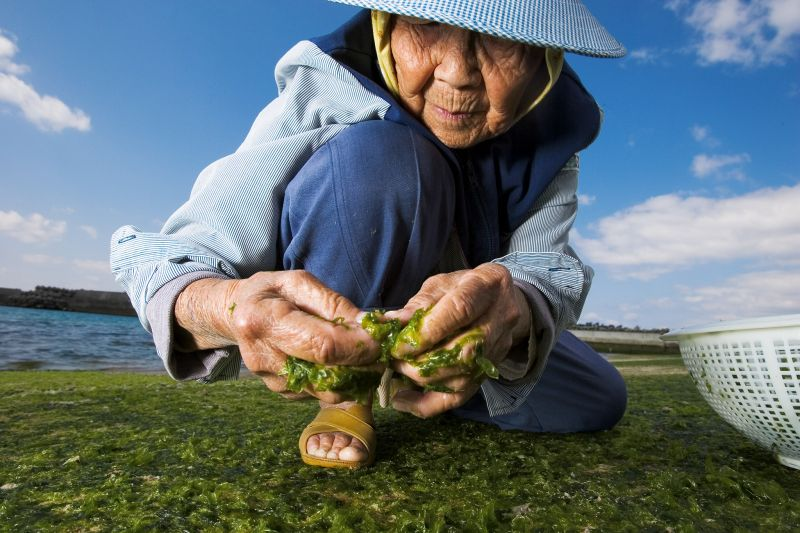 Một cư dân 86 tuổi ở Okinawa