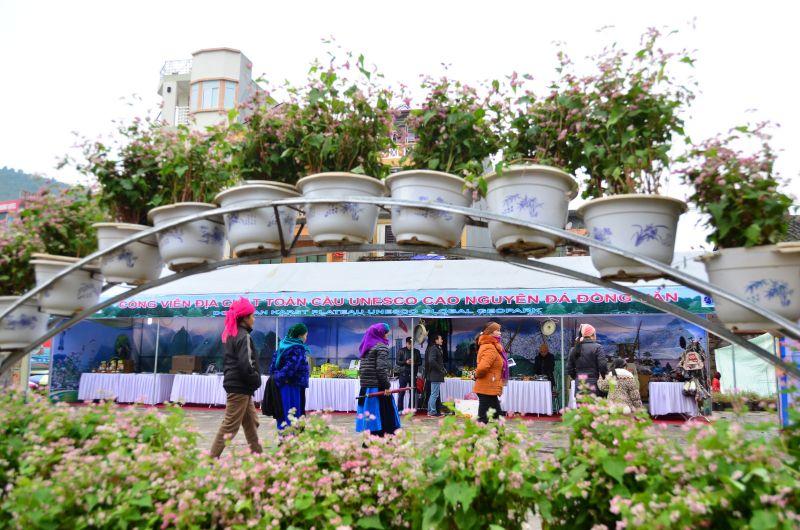 Lễ hội Tam Giác Mạch Hà Giang lần III