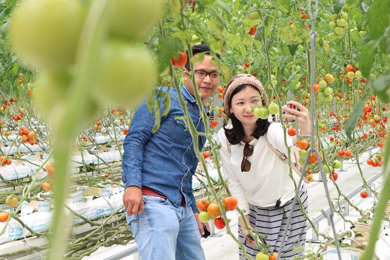 イワキワンダーファームトマト農場