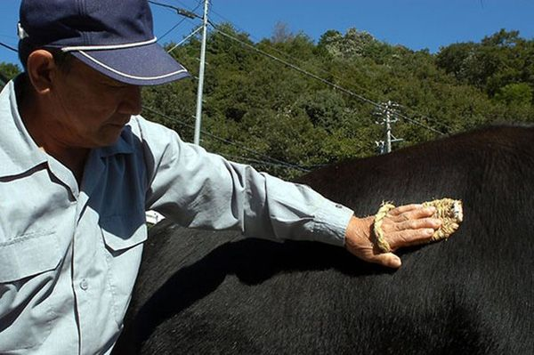 仙台牛がが成長すればするほど丁寧な育成が必要になります