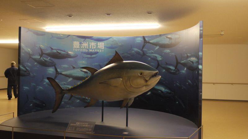 Mô hình cá ngừ Toyosu