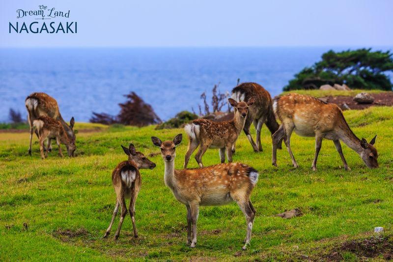 Công viên hoang dã Nozaki