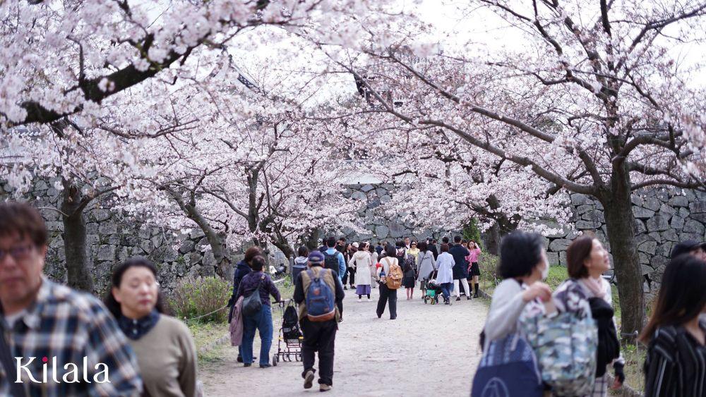 Sakura - Kilala