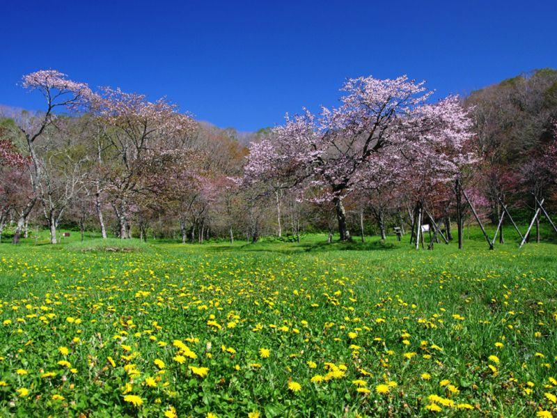 Công viên Beppo