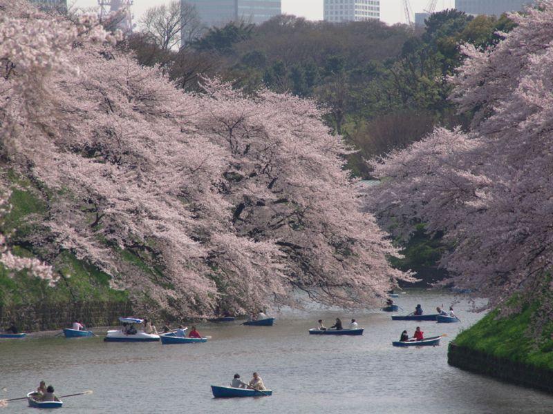 công viên Chidorigafuchi