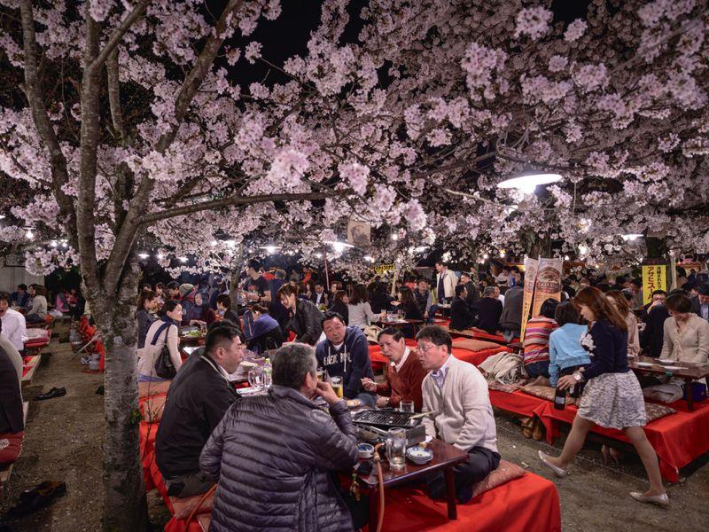 ライトアップされた桜を見ながらの宴会も盛り上がる