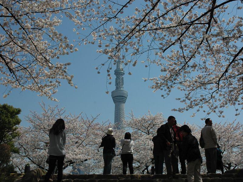 Tokyo Sky Tree trong mùa hoa anh đào