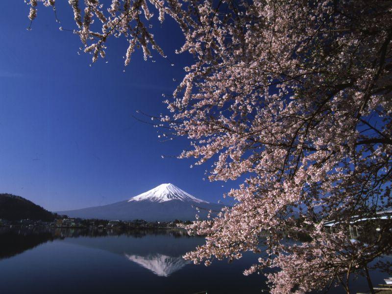 産屋ヶ崎からは富士山と湖と桜を一望できる