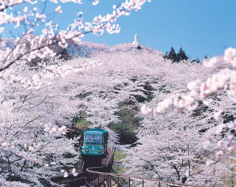 船岡城址公園のスロープカーと桜のトンネル