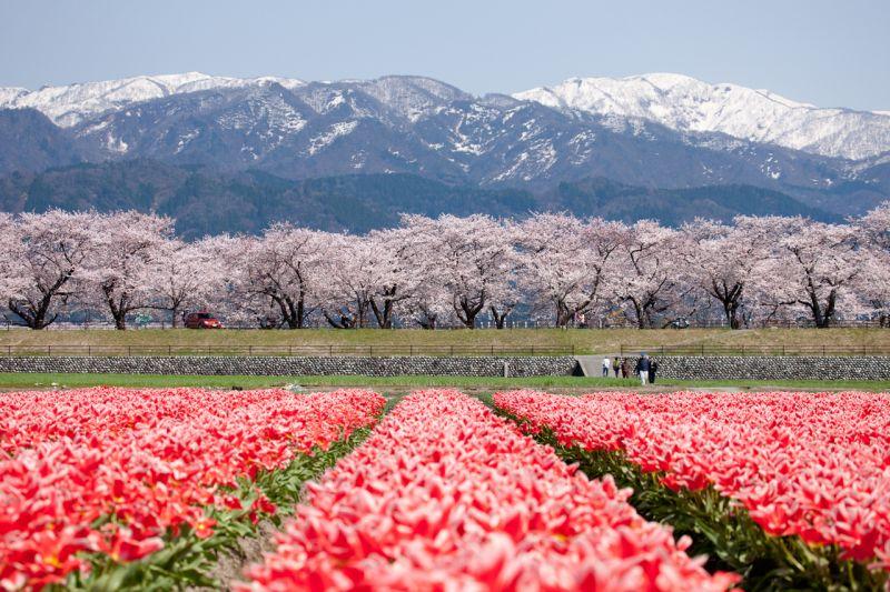 mùa xuân Toyama
