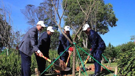 ダラットに日本の桜が植えられた